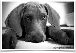 photodog